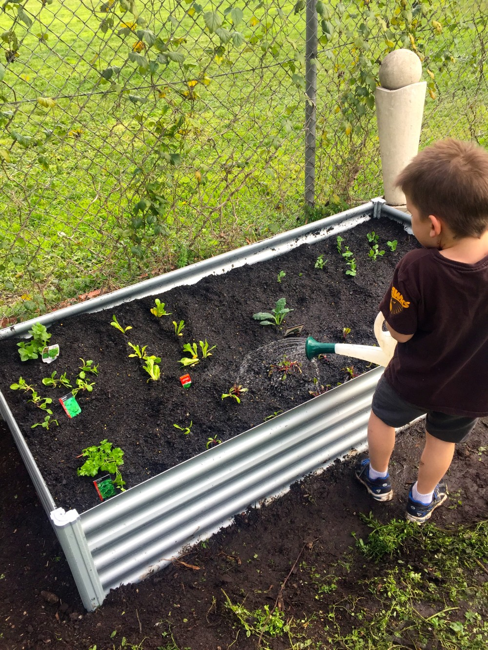 How to start a vegetable garden watering by little man for Watering vegetable garden